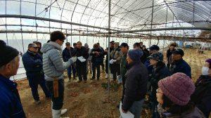 ブドウの剪定を学ぶ参加者たち
