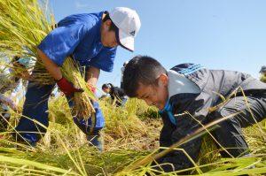 稲刈りを楽しむ子どもたち