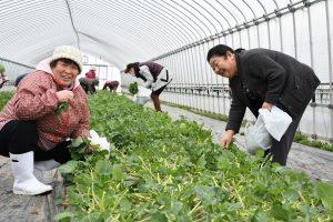 収穫を楽しむ参加者