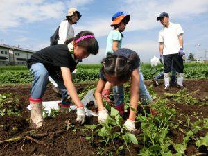 夢中でジャガイモを掘る子どもたち