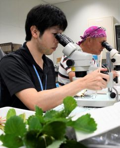 花芽を入念に検査する職員たち