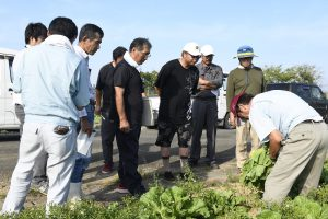 白菜の実物を見て生育を確認する参加者たち