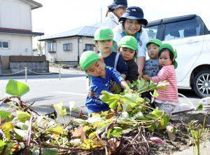 先生と協力して力いっぱいツルを引っ張る園児ら