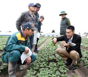 ホウレンソウを手に取り説明する吉田室長(右)と生産者ら